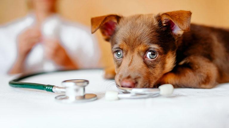 Petit chien mignon à la clinique vétérinaire de la Roche