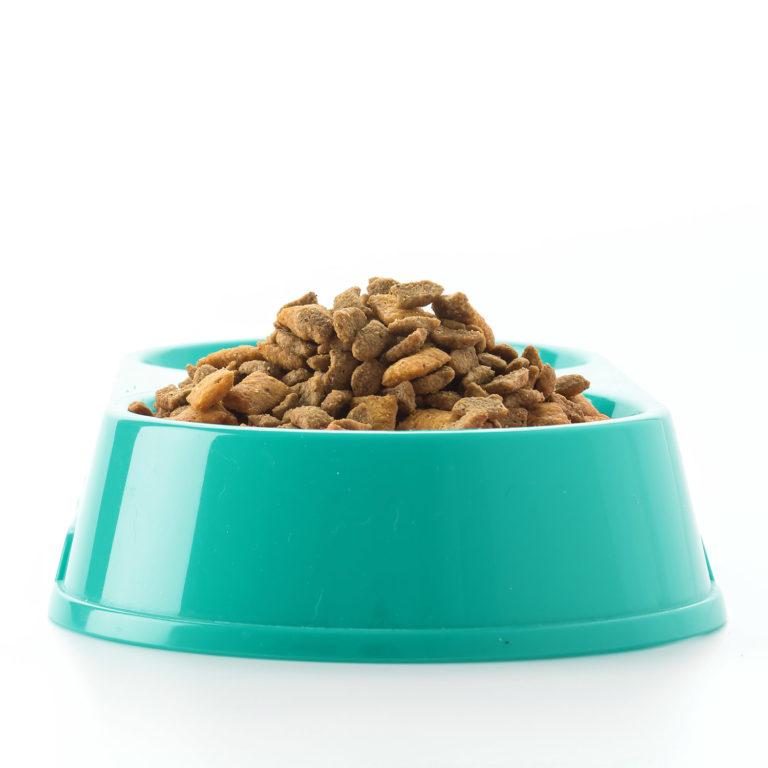 conseils-en-nutrition-a-la-clinique-veterinaire-de-la-roche-a-poitiers